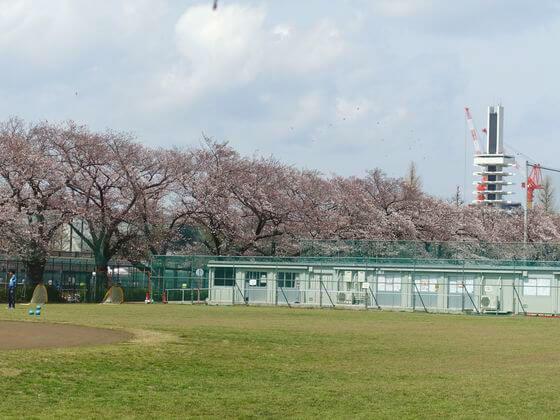 駒沢オリンピック公園 お花見