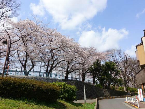 お花見 駒沢オリンピック公園