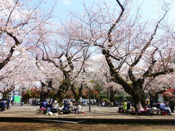 桜 東京工業大学
