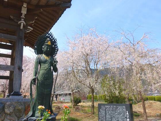 道光寺 桜
