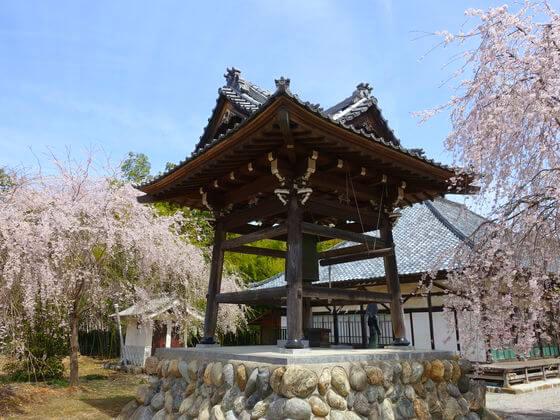 桜 道光寺