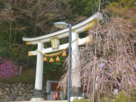 宝登山神社 枝垂れ桜