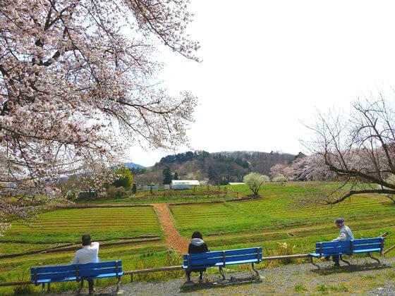 野土山 桜の里