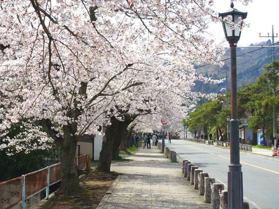 宝登山神社 桜 見頃