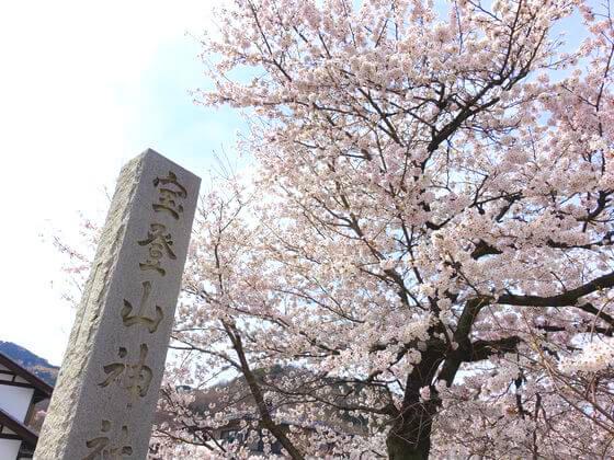宝登山神社 参道 桜