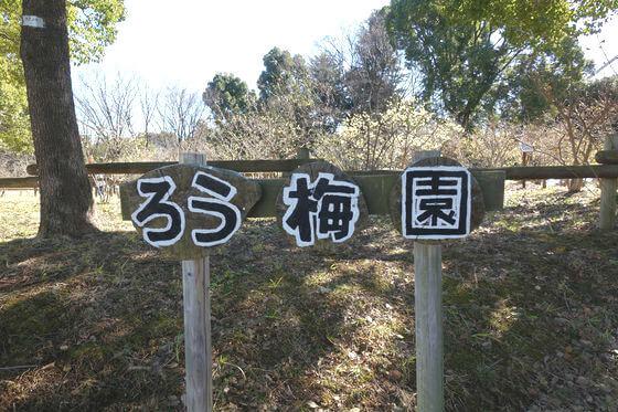 所沢航空公園 ロウバイ園