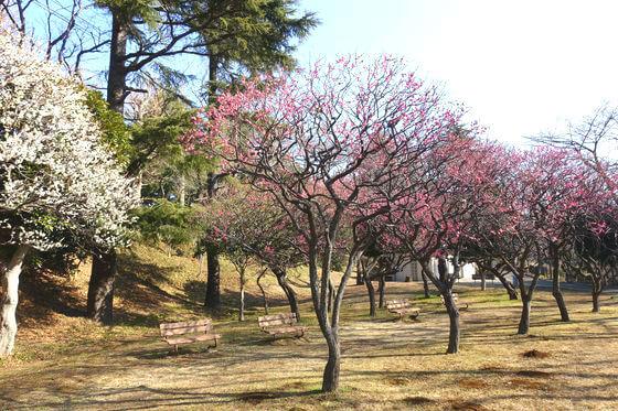 梅園 保土ケ谷公園