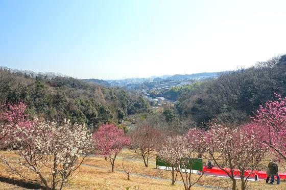 金沢自然公園 梅林
