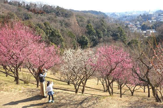 梅 金沢自然公園