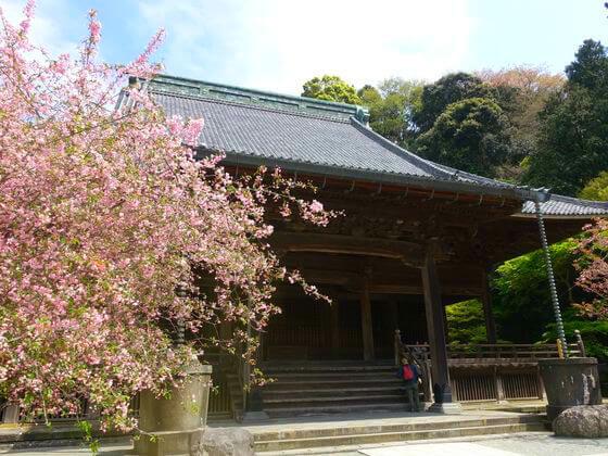 鎌倉 海棠