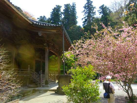 妙本寺 鎌倉 カイドウ