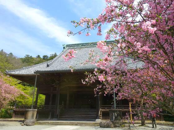 妙本寺 カイドウ