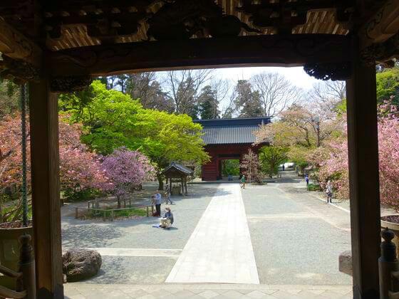 鎌倉 妙本寺 海棠