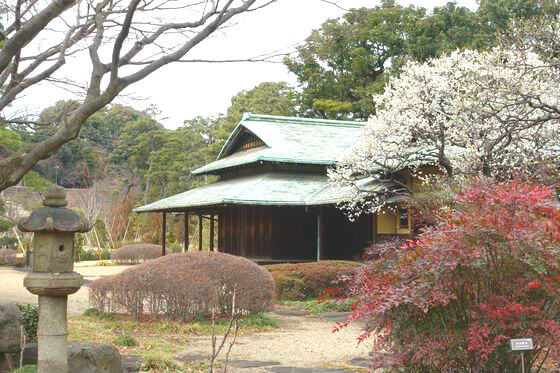 東御苑 諏訪の茶屋 梅