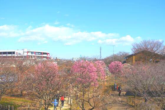 都市農業公園 梅