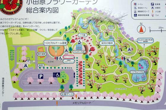 小田原フラワーガーデン 梅 地図
