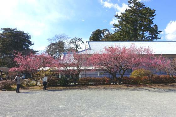 小田原城 梅 場所