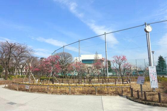 隅田公園 梅めぐり散歩道