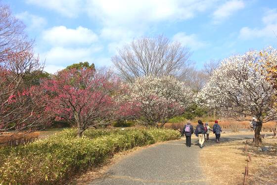 昭和記念公園 ウメ