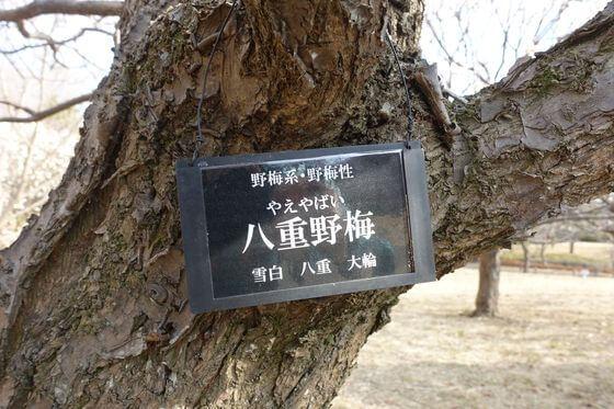 昭和記念公園 花木園 梅