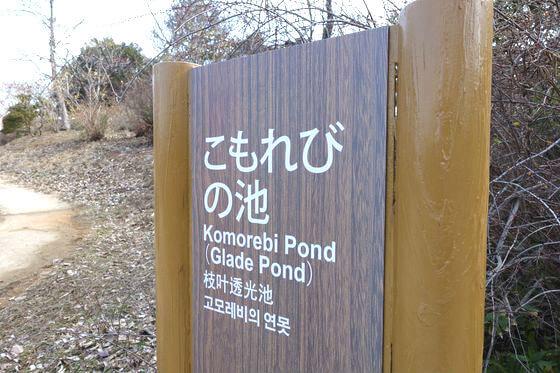 昭和記念公園 こもれびの池 梅