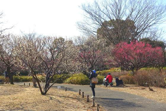 昭和記念公園 花木園 ウメ