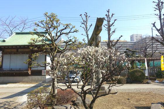 梅 隅田川神社