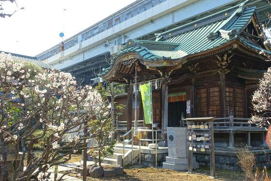 隅田川神社 梅