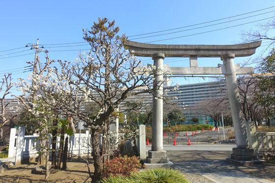 隅田川神社 ウメ