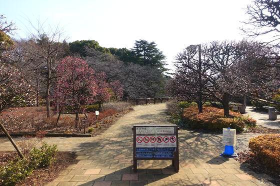 哲学堂公園 梅園