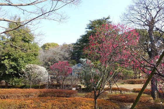 中野 梅園