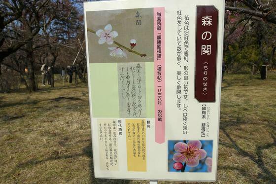 神代植物公園 梅 説明版