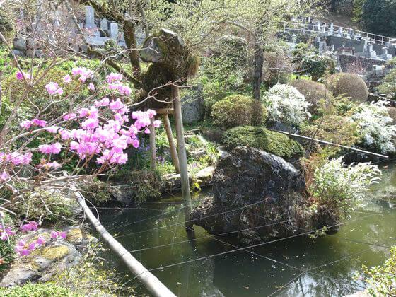 埼玉 法善寺