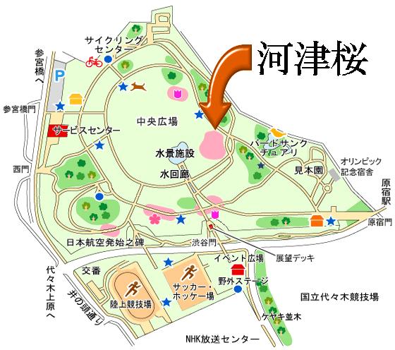 代々木公園 河津桜 場所