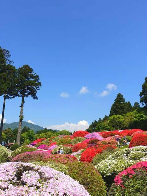 山のホテル ツツジ 富士山