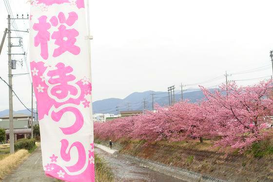 洞川河津桜まつり