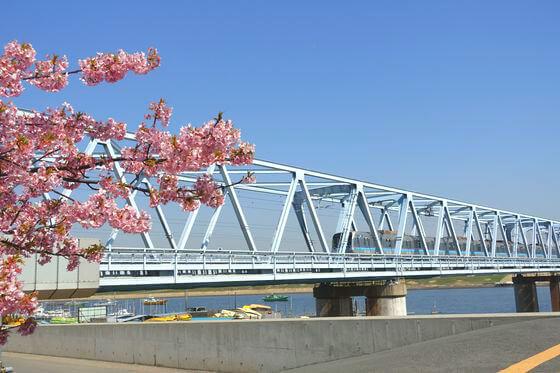 東西線 河津桜