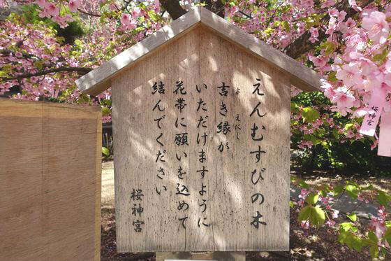 桜神宮 縁結びの木
