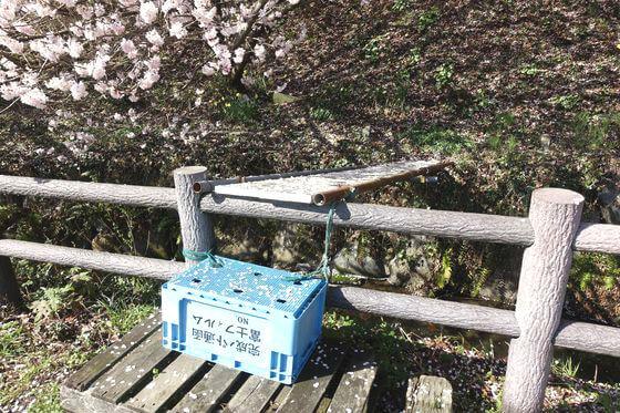 大雄山 桜