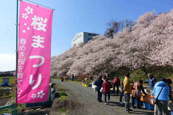 一の堰ハラネ春めき桜まつり