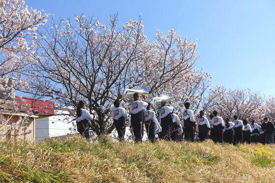 神奈川 桜