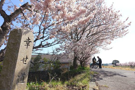 足柄 幸せ道 桜