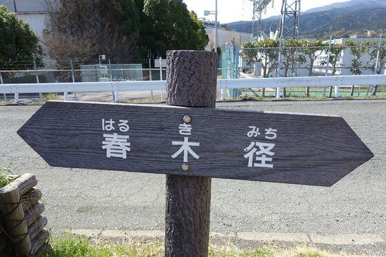 足柄 春木径 桜
