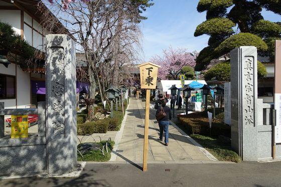 川口 密蔵院 桜