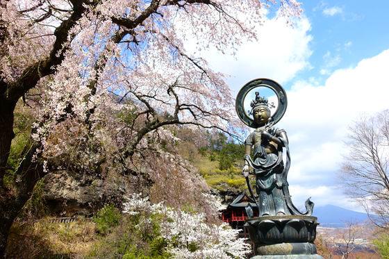 釈尊寺 桜