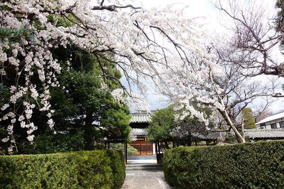 海応院 桜 見頃