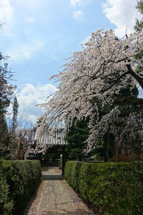 桜 海応院