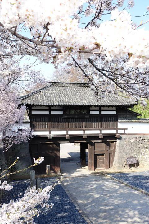 小諸城 三の門 桜