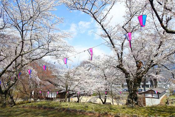 小諸城 南丸跡 桜