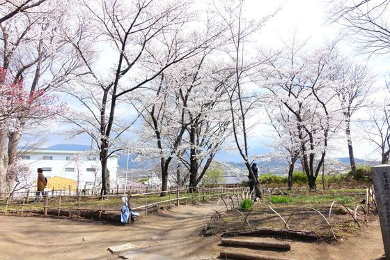 小諸城 二の丸跡 桜